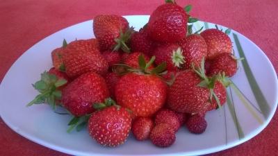 Dejte si čerstvě natrhané  jahody pro zdraví i mlsání