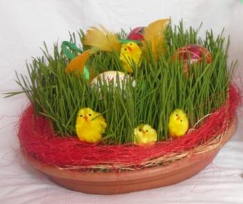 Obilí rovněž patří k jaru a Velikonocích. Zasaďte si jej do ošatky nebo do misky pod květináč. Obilí poté ozdobte dle libosti, vajíčky, kuřátky, peříčky...