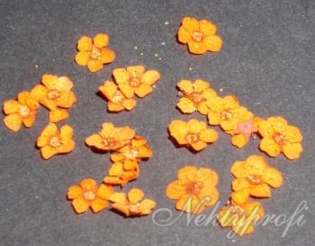 oranžové sušené květiny